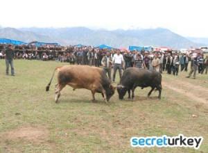 13-kilickaya-boga-guresleri-festivali-1441143_b copy