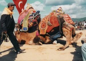deve-guresi-resimleri