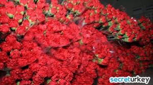 Antalya Kesme cicek uretimi 300x167 Antalyanın Neyi Meşhur?