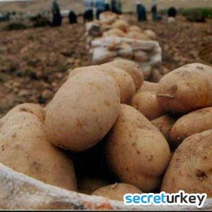 Türkiye'nin Elma ve Patates Deposu